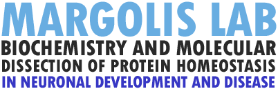 The Margolis Lab | Hopkins Logo